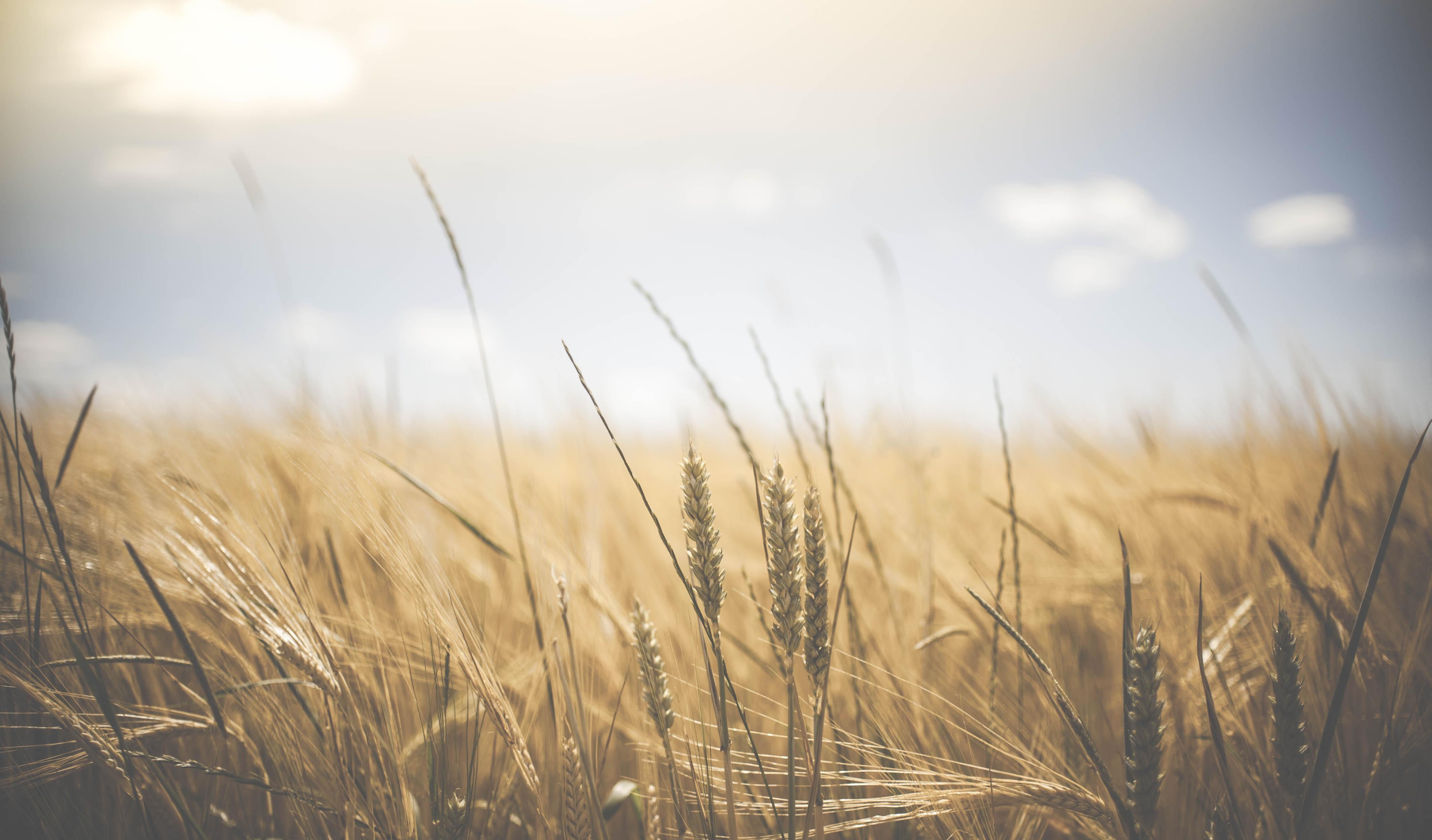 Energia solar em propriedades rurais: conheça os benefícios!